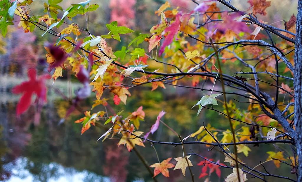 Sensibilizaci n ambiental la vida en im genes colores de for Arboles que no se le caen las hojas en invierno