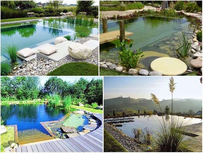 What are biological pools piscinas biol gicas entenda for Piscinas biologicas