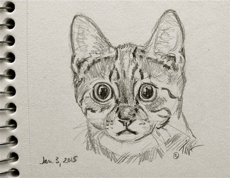 """Fraidy Cat-updated"" 3""x 3"" graphite on paper, © 2015 Tina M Welter  Pencil drawing of a wide eyed cat."