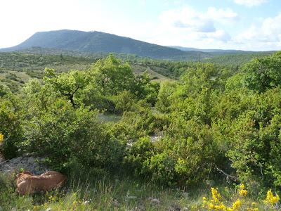 サン・ギエムの道 モンダルディエからブランダへ Montdardier - Blandas 放牧