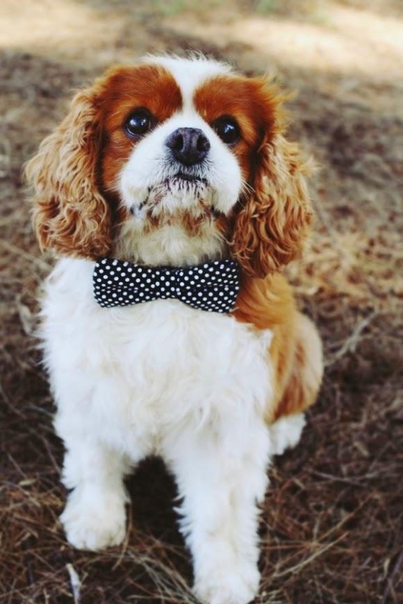 Cute Amazing Puppy