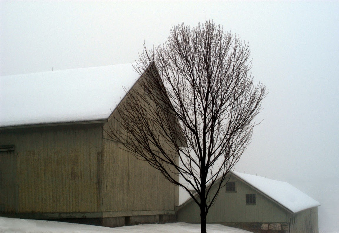 """Barns in Fog"" by Judith Secco, photograph"