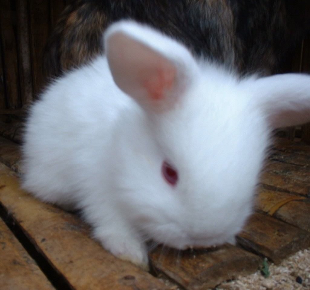 Cute White Rabbit