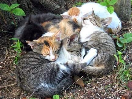 Would A Mom Cat Scare Kittens Away