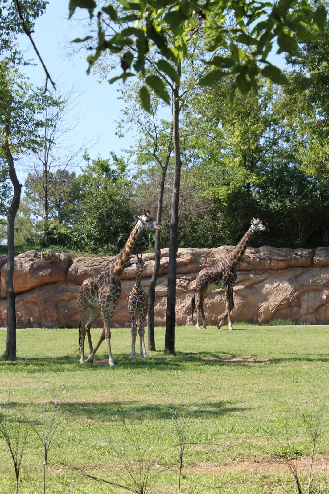 zoo i Sjælland coop fotobog