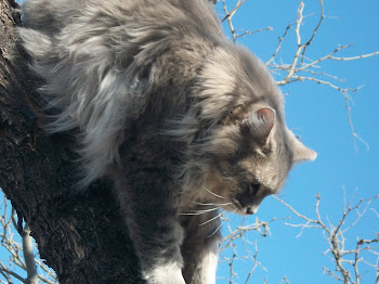 Loki up a tree