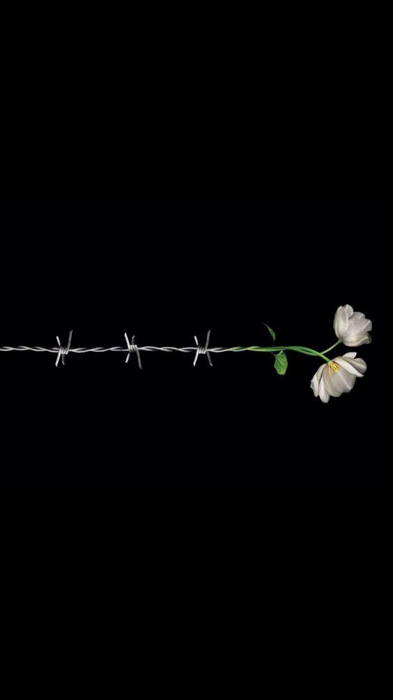 « Je veux garder les yeux ouverts sur les souffrances, le malheur, la cruauté du monde,