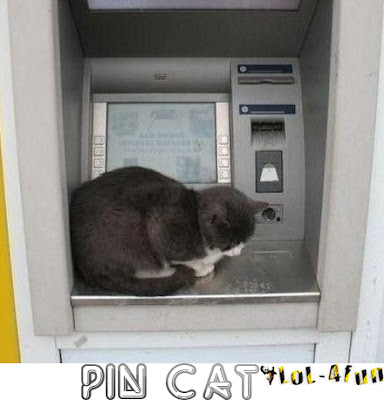 Funny cat at ATM