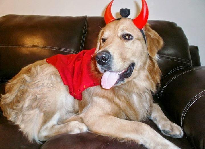 Perro Labrador Disfraz