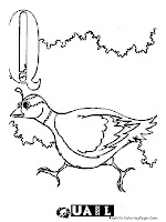 Quail Animal Alphabet Coloring Pages Realistic