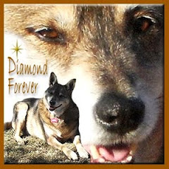Diamond Doggie RIP