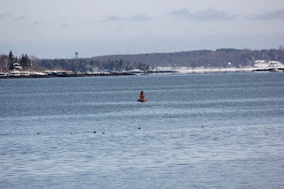 red buoy in Harraseeket River