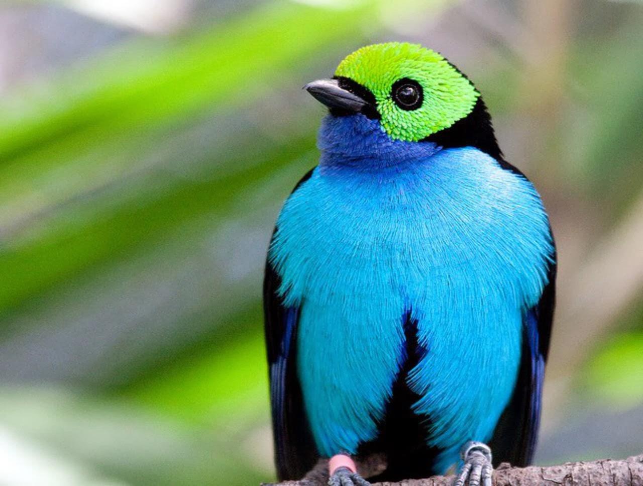 Rare Birds Of Paradise Birds Of Paradi...