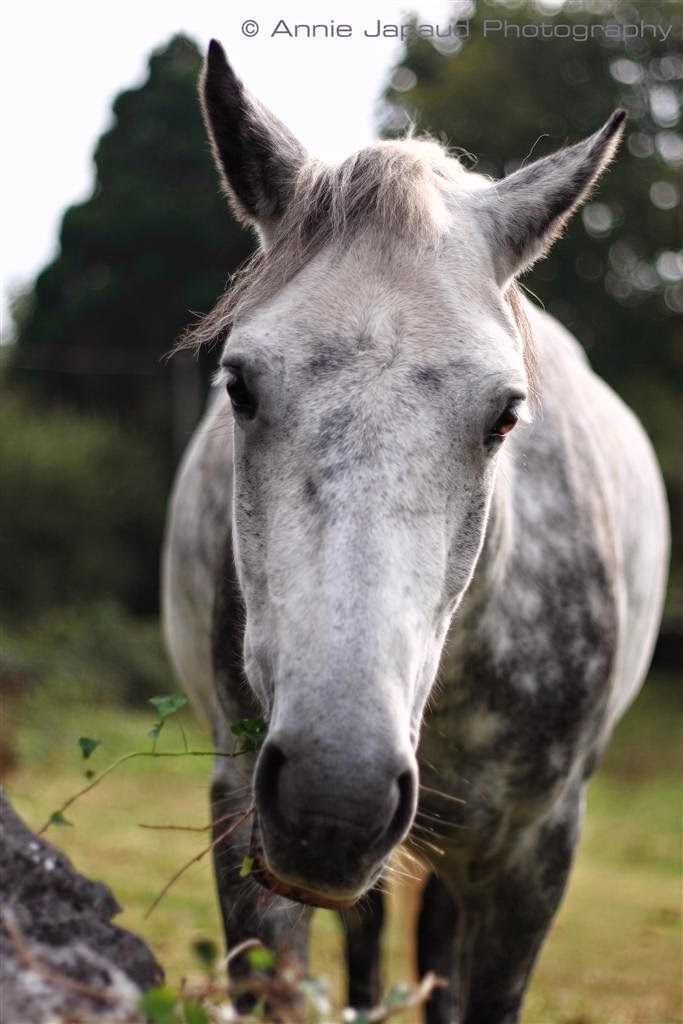 horse miage