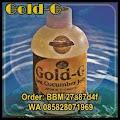 Gold G Sea Cucumber