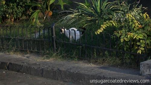 Manila Bay cats
