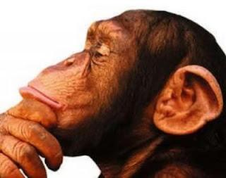 Mono pensando en qué escribir ahora