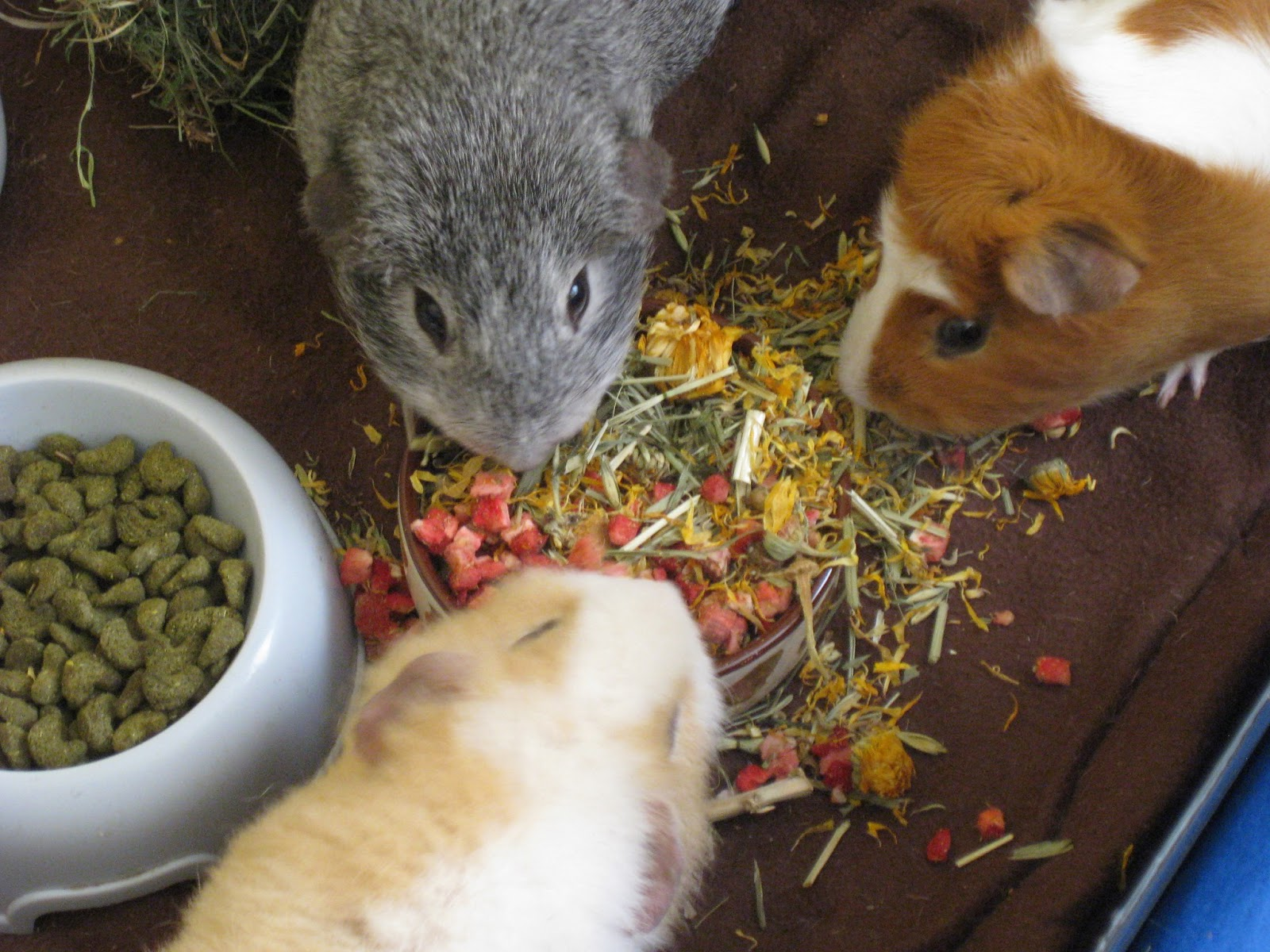 how to make guinea pig treats without oats