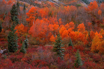 autumn/fall colors, natural hills, red
