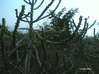 Cactus shrubs, jungle adventure