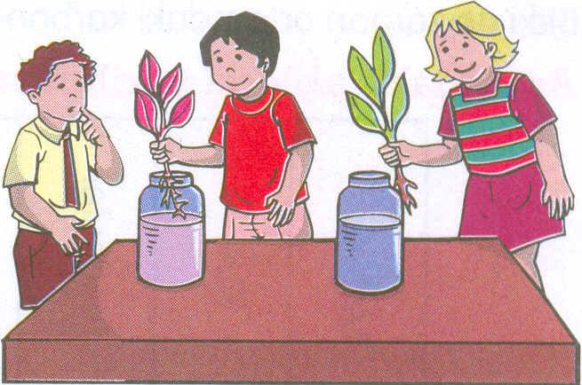Yaprak nedir, yaprağın görevleri, yaprağın kısımları, yaprak çeşitleri slayt