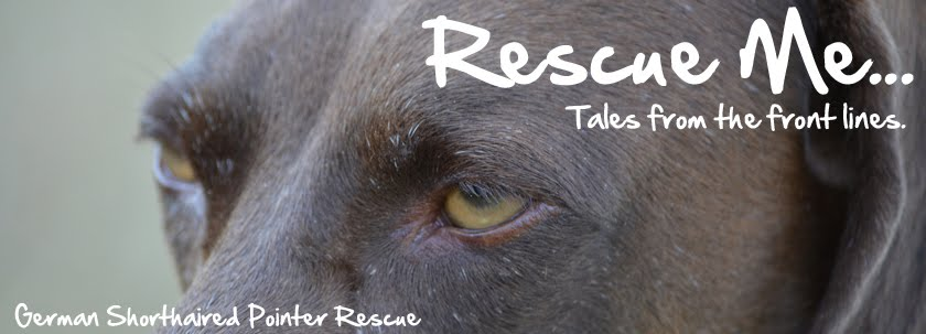 Rescue Me - GSP Rescue Tales From The Front Lines