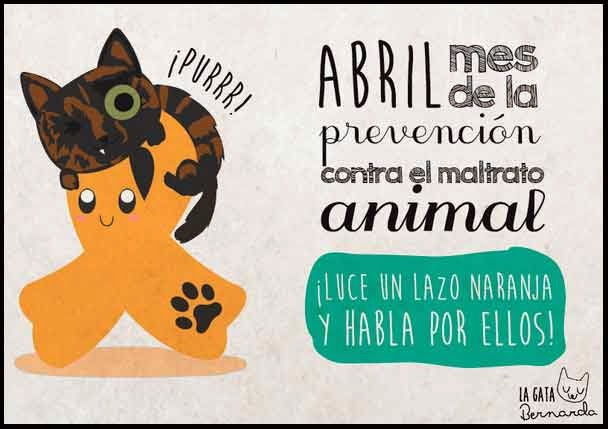 Lazo naranja para la prevención contra el maltrato animal. La Gata Bernarda