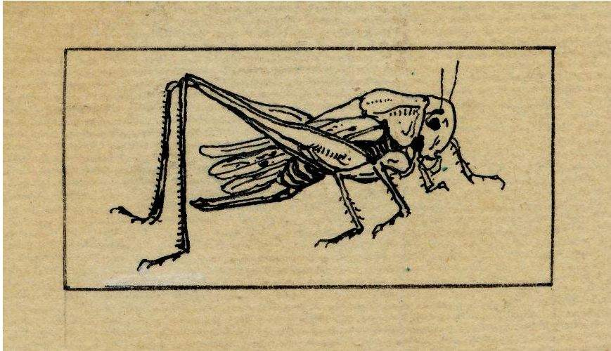 Gypsy Magic Cricket Superstitions And Lore