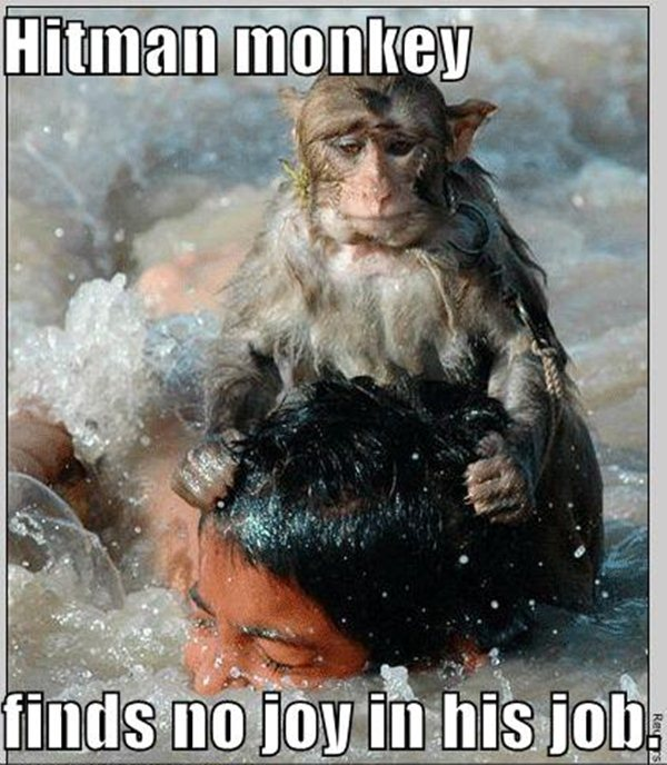 animal pictures with captions, hitman monkey