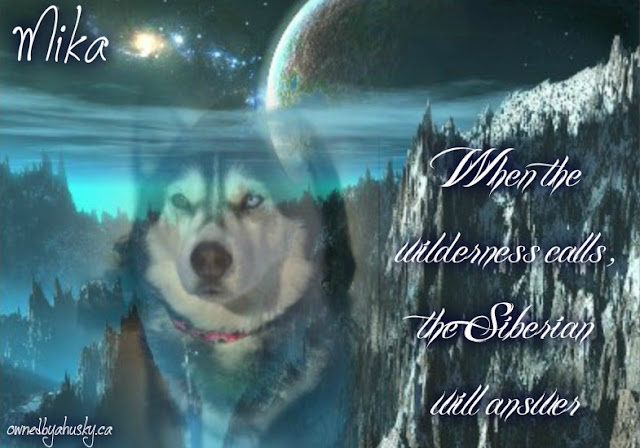 Siberian Husky Graphic Creations