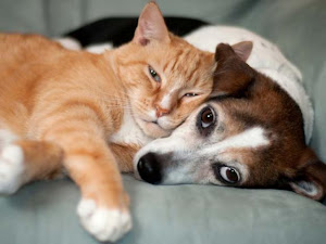 Defesa Jurídica Animal Somos um grupo de Advogados que exerce Advocacia para a Causa Animal.