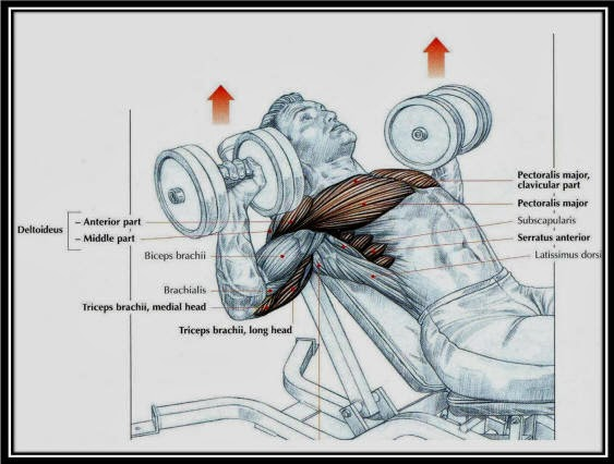 Dumbbell Incline Press Nas  l Yap  l  r Incline Dumbbell Press