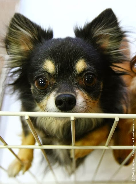 Di Jepang Ada Persewaan Anjing