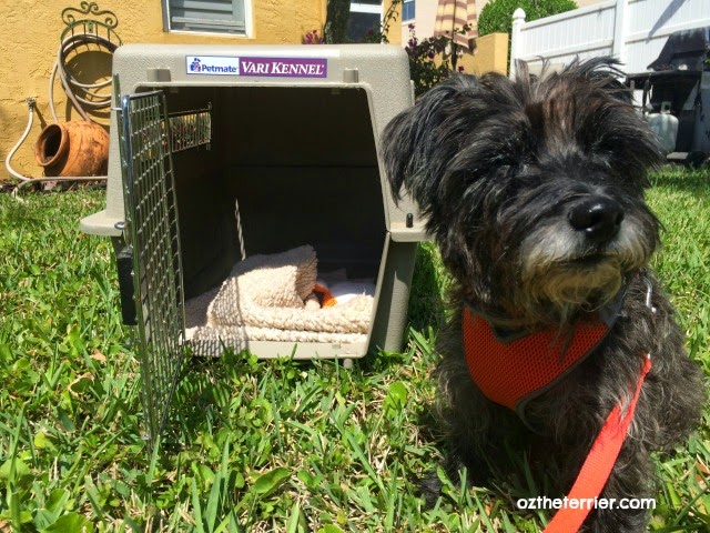 Oz the Terrier | PetSmart sale for pet crates, carriers and kennels