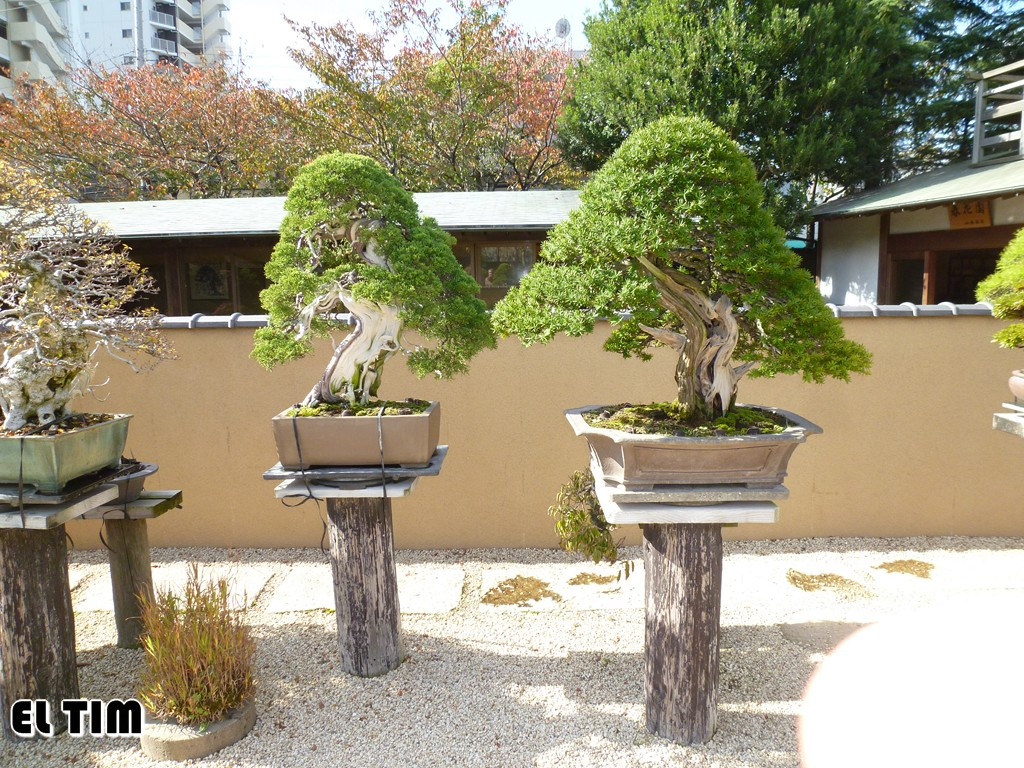El tim bonsai jap n 2 parte 3 el jardin de kunio kobayashi - Jardin de bonsais ...