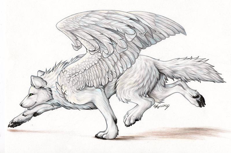 Commission Whitewolfby Lyanti