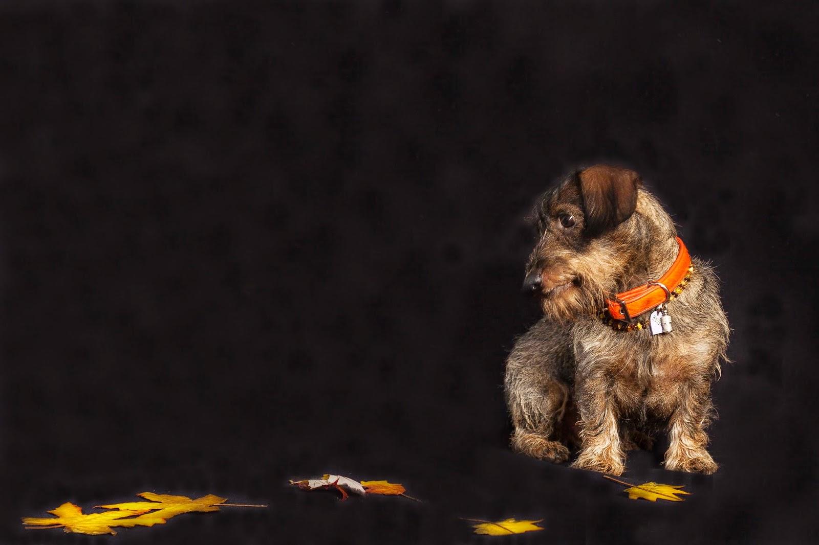 Holly&Lil Brightside dog collar