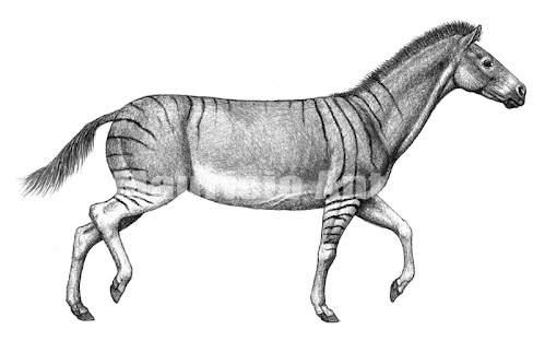 Equidae fosil Anchitherium