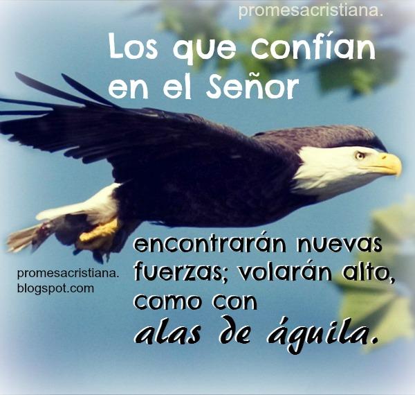 Promesa cristiana confianza en Dios, levantarán alas como águilas, tener éxito, vencer en pruebas, reflexiones cristianas cortas