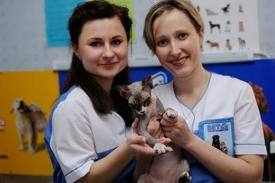 Вакцинация кошек и собак в Запорожье