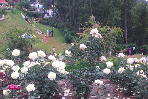 Development Corporation Limited Maintains These Gardens Rose Garden