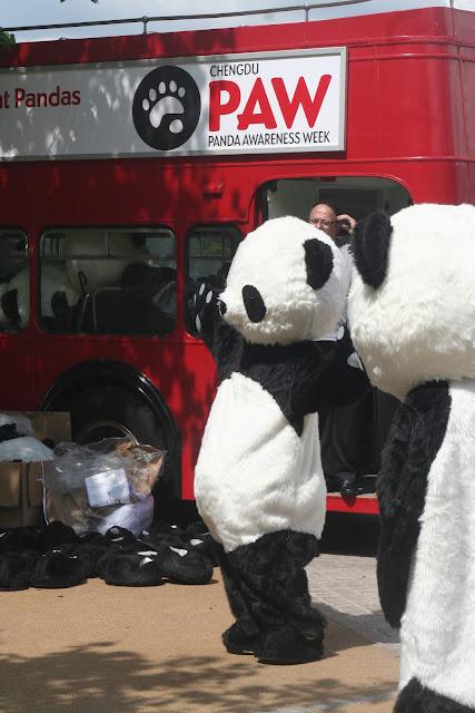 Panda Awareness Week on South Bank.