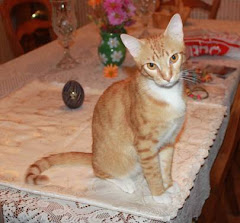 8/9/12 Cats, Kittens, ADOPT RESCUE FREE TRANSPORT from Hinesville, GA to Hammonton, NJ is available