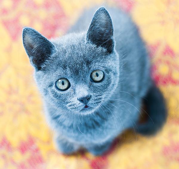 взгляд в душу, глаза кота, котенок смотрит