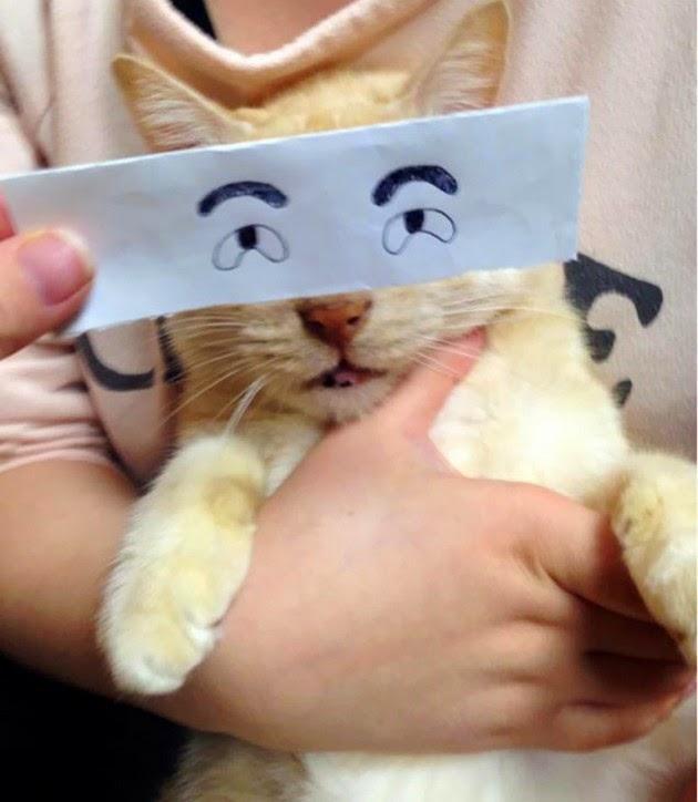 new photo trend, Cat Montage