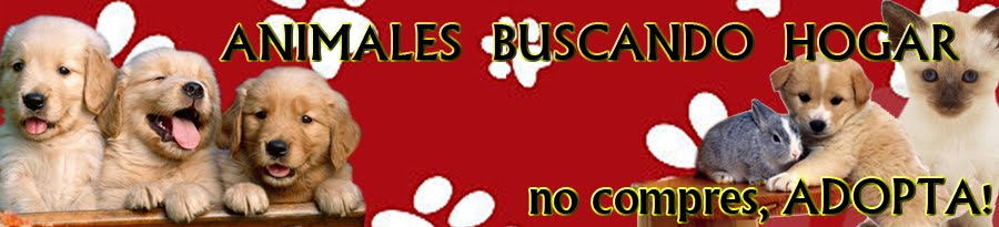 Animales Buscando Hogar, No Compres, ADOPTA!