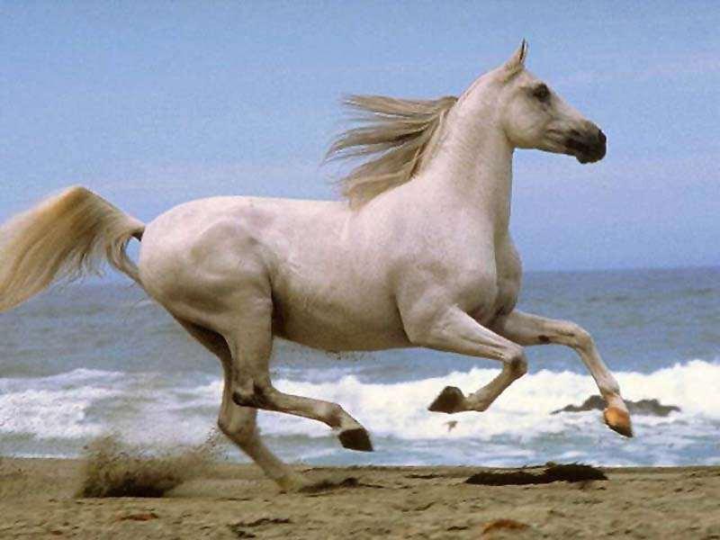 فوائد رياضة ركوب الخيول... XTt45549