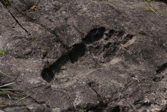 Découverte Enigmatique : Ceci est l'empreinte fossilisée d'un vieux géant ?