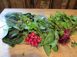 Items from June 12 CSA Bags
