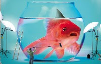 Frasi simpatiche per il Pesce d'Aprile